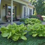 Hosta Sum & Substance